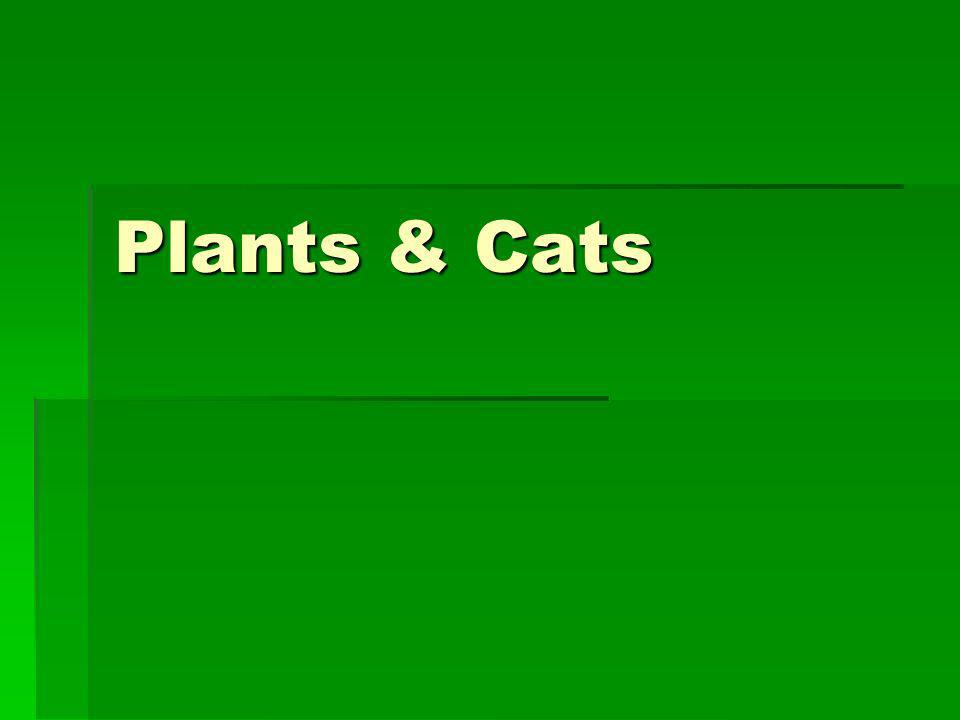 General Information Most cats love to nibble on greenery Most cats love to nibble on greenery Anything from decorative house plants, lush tropical, and colorful floral accents Anything from decorative house plants, lush tropical, and colorful floral accents Cats are fond of the taste of different grasses Cats are fond of the taste of different grasses