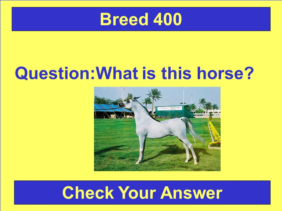 Question:What is this horse Check Your Answer Breed 400