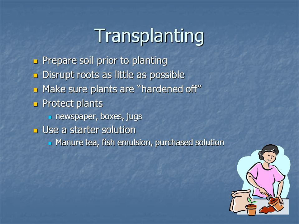 Transplanting Prepare soil prior to planting Prepare soil prior to planting Disrupt roots as little as possible Disrupt roots as little as possible Make sure plants are hardened off Make sure plants are hardened off Protect plants Protect plants newspaper, boxes, jugs newspaper, boxes, jugs Use a starter solution Use a starter solution Manure tea, fish emulsion, purchased solution Manure tea, fish emulsion, purchased solution