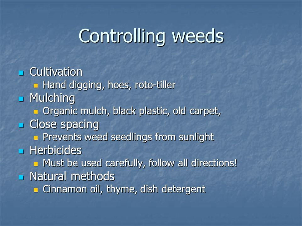 Controlling weeds Cultivation Cultivation Hand digging, hoes, roto-tiller Hand digging, hoes, roto-tiller Mulching Mulching Organic mulch, black plastic, old carpet, Organic mulch, black plastic, old carpet, Close spacing Close spacing Prevents weed seedlings from sunlight Prevents weed seedlings from sunlight Herbicides Herbicides Must be used carefully, follow all directions.