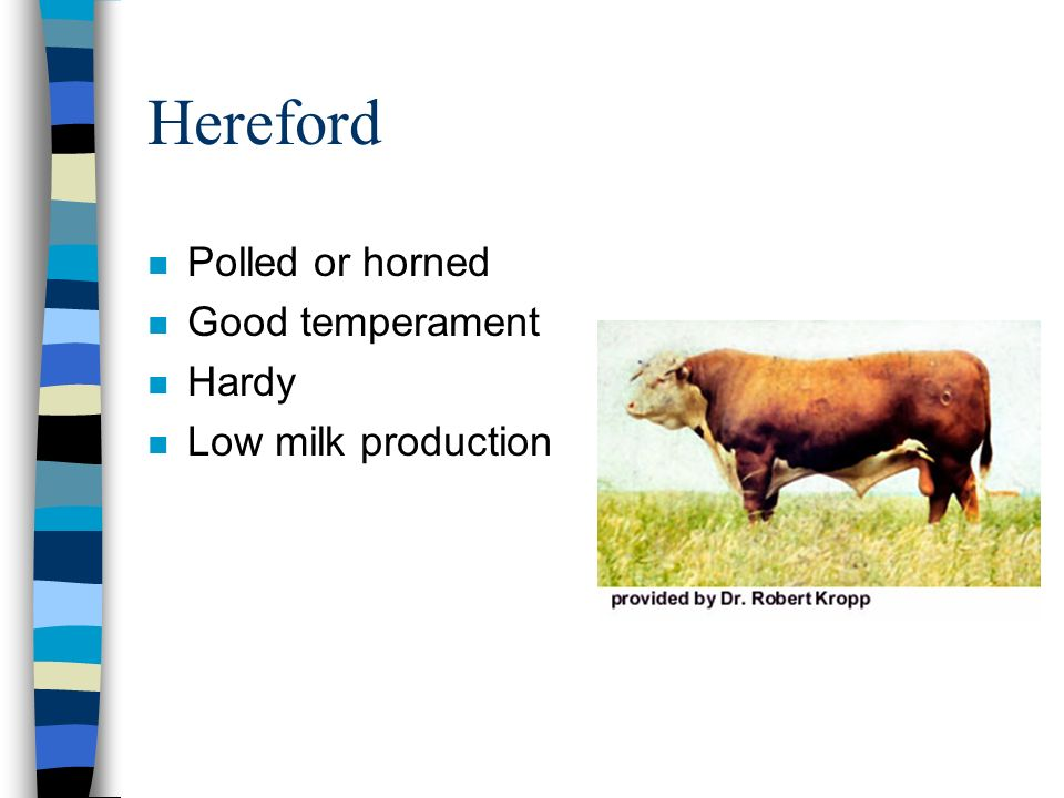 Hereford n Polled or horned n Good temperament n Hardy n Low milk production