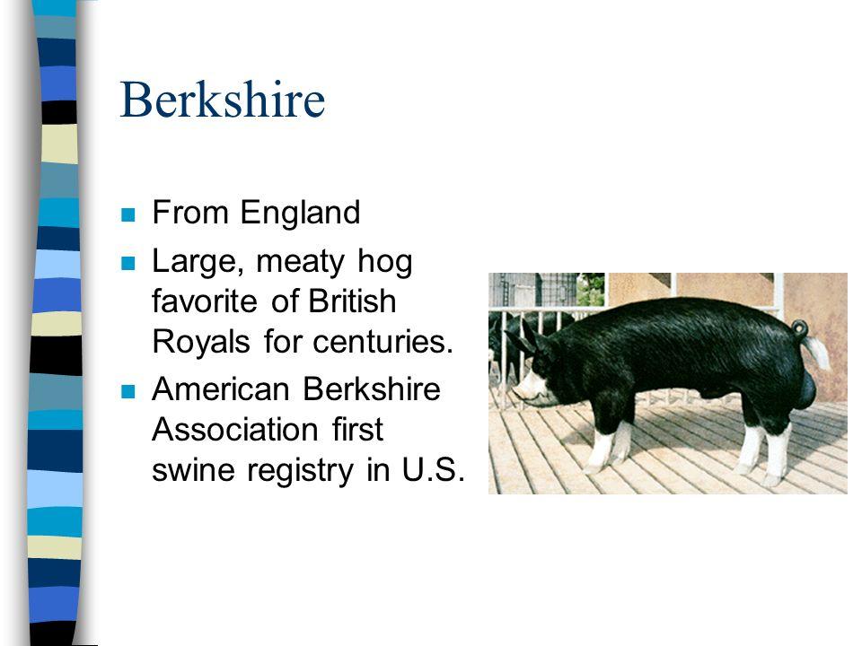Berkshire n From England n Large, meaty hog favorite of British Royals for centuries.