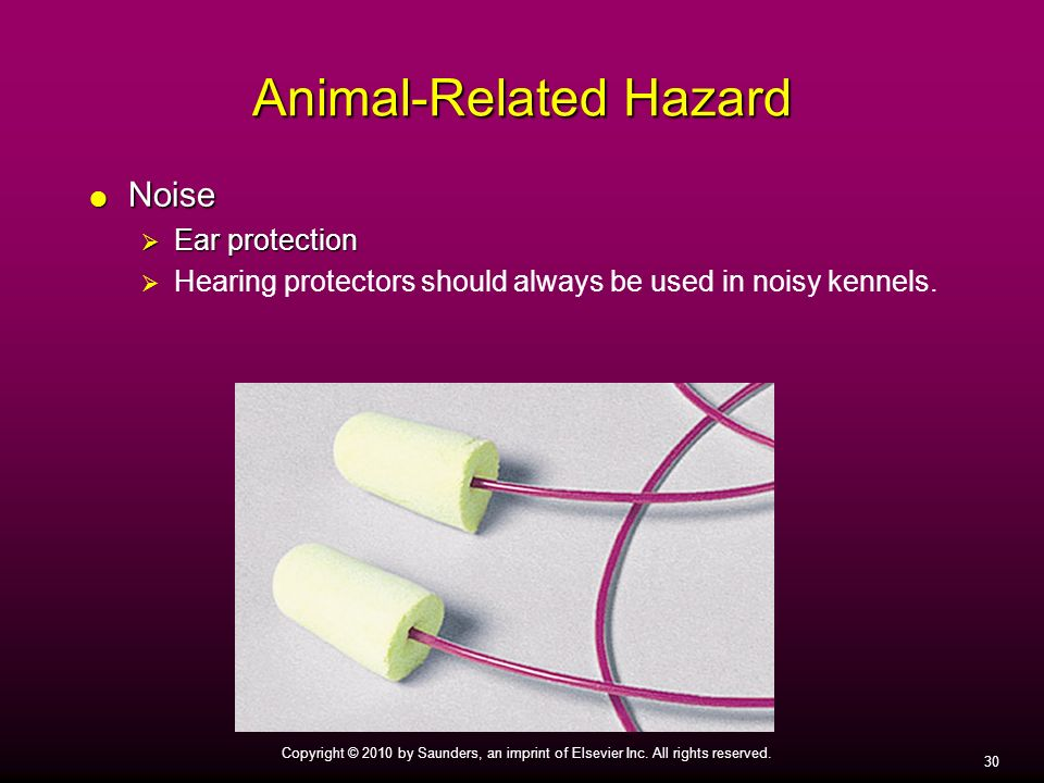 30 Copyright © 2010 by Saunders, an imprint of Elsevier Inc. All rights reserved. Animal-Related Hazard Noise Noise Ear protection Ear protection Hear