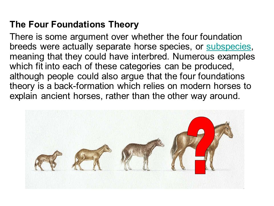 The Four Foundations Theory There is some argument over whether the four foundation breeds were actually separate horse species, or subspecies, meanin