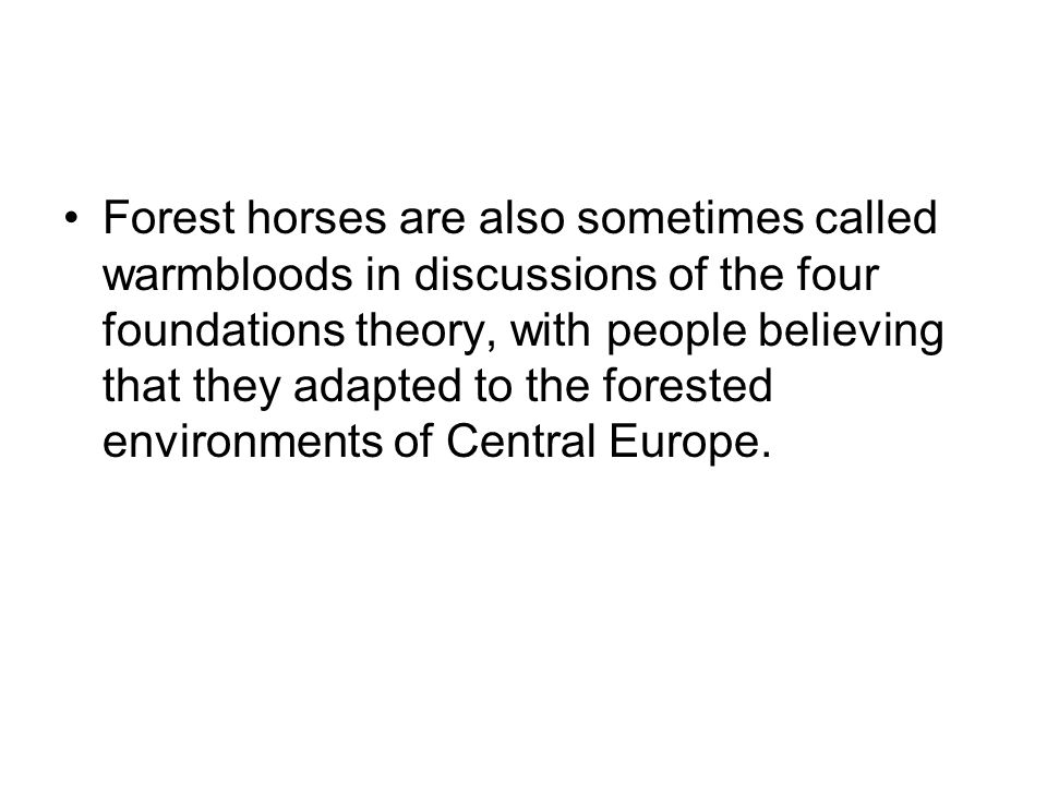 Forest horses are also sometimes called warmbloods in discussions of the four foundations theory, with people believing that they adapted to the fores