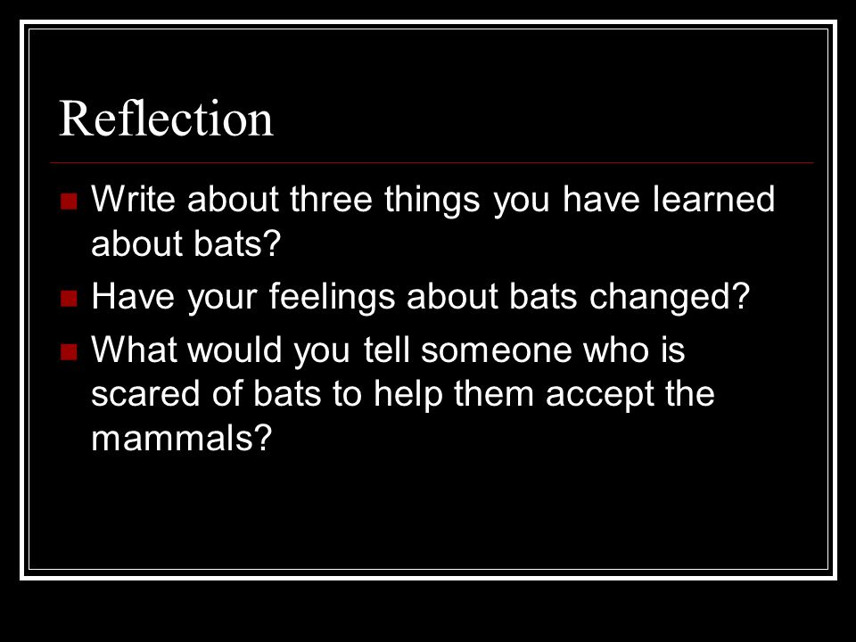 Reflection Write about three things you have learned about bats? Have your feelings about bats changed? What would you tell someone who is scared of b