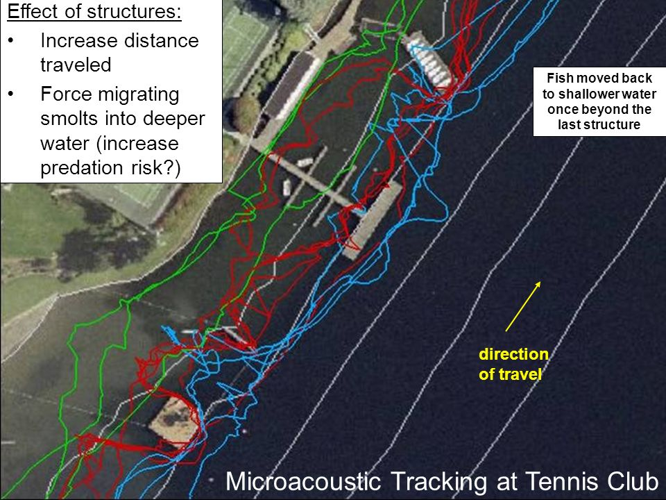direction of travel Effect of structures: Increase distance traveled Force migrating smolts into deeper water (increase predation risk ) Fish moved back to shallower water once beyond the last structure Microacoustic Tracking at Tennis Club