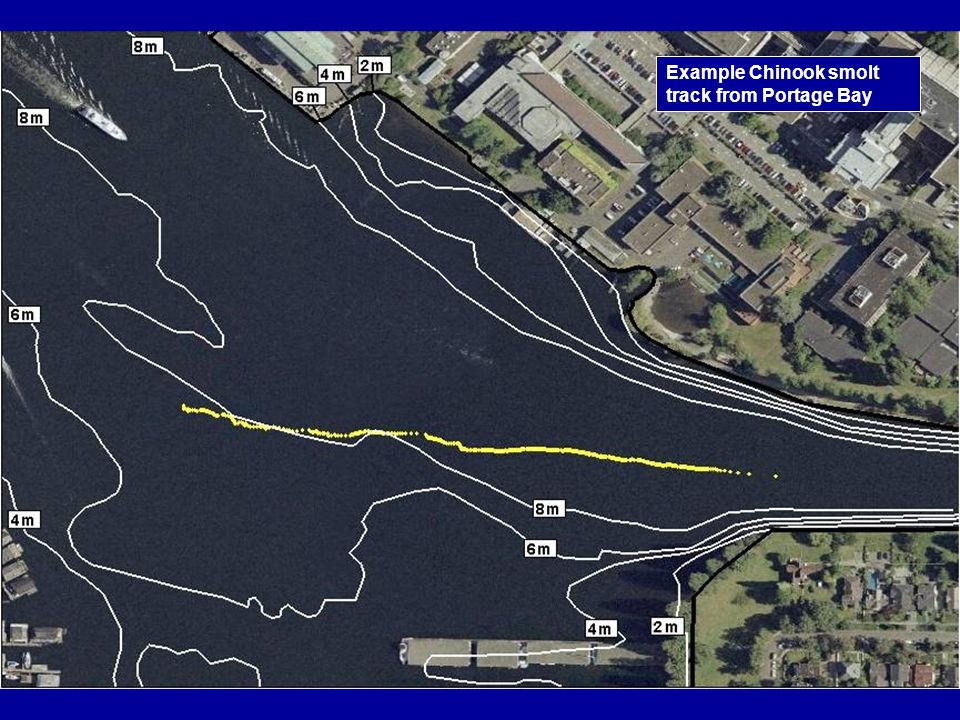 Example Chinook smolt track from Portage Bay