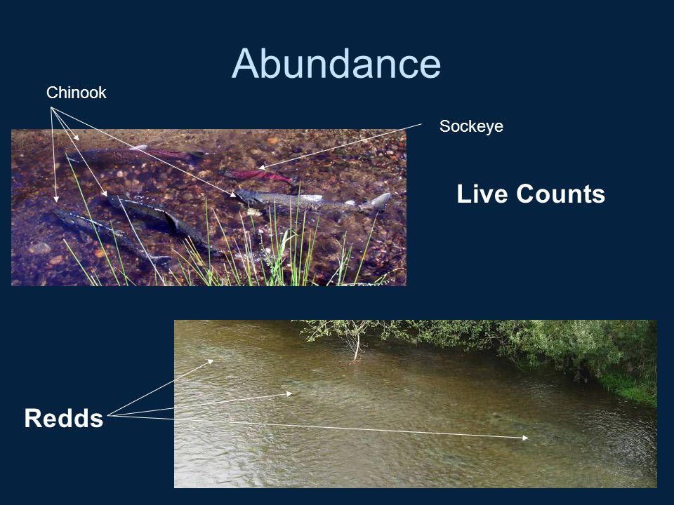 Abundance Live Counts Redds Sockeye Chinook