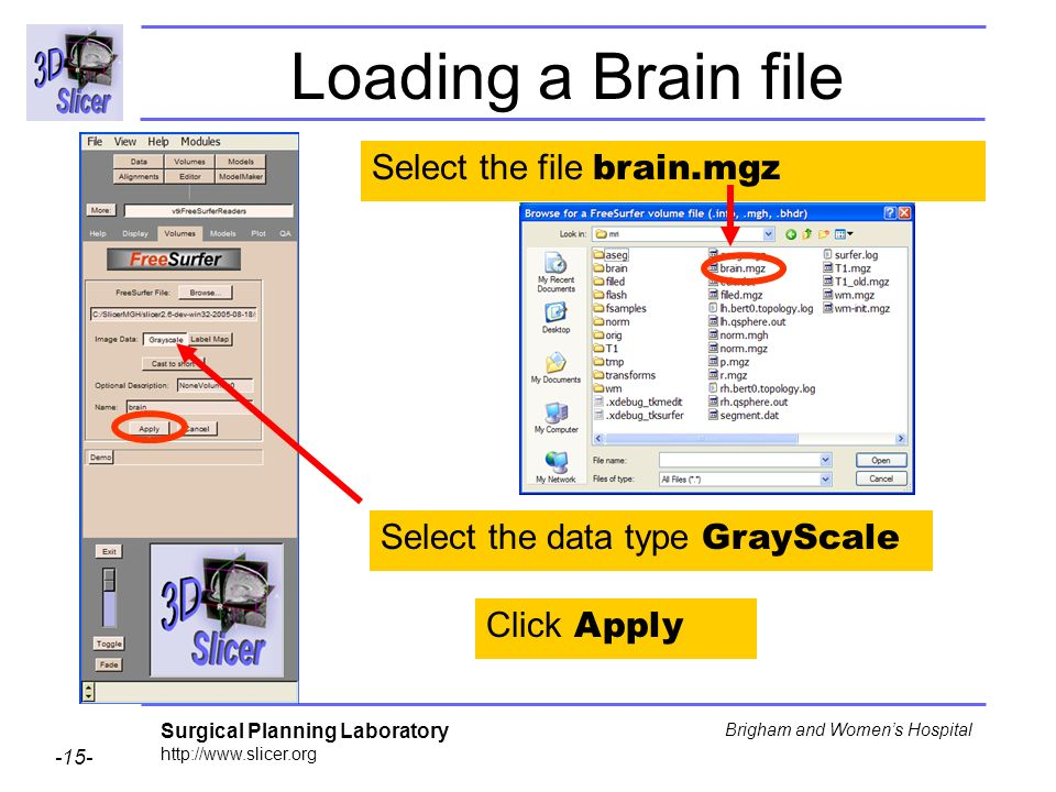 Surgical Planning Laboratory http://www.slicer.org -15- Brigham and Womens Hospital Loading a Brain file Select the file brain.mgz Select the data typ