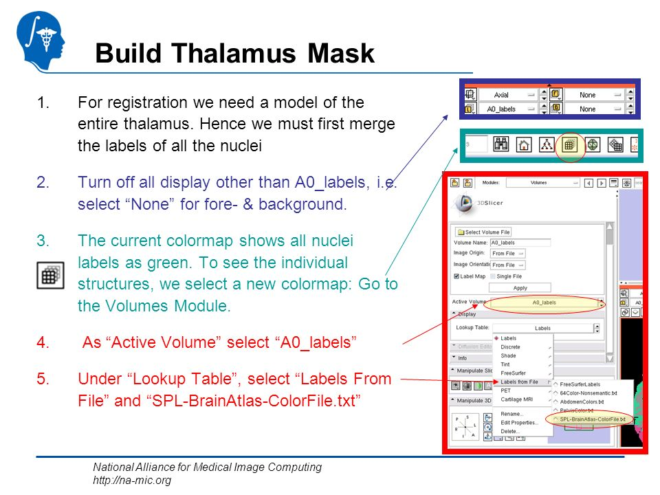 National Alliance for Medical Image Computing http://na-mic.org Build Thalamus Mask 1.For registration we need a model of the entire thalamus.