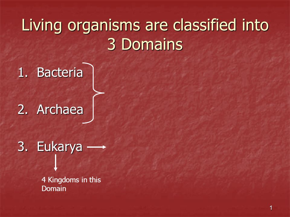 2 Domain Eukarya has 4 Kingdoms 1.Kingdom Protista 2.