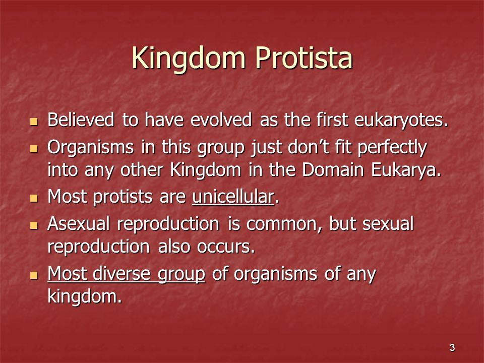 3 Kingdom Protista Believed to have evolved as the first eukaryotes. Believed to have evolved as the first eukaryotes. Organisms in this group just do