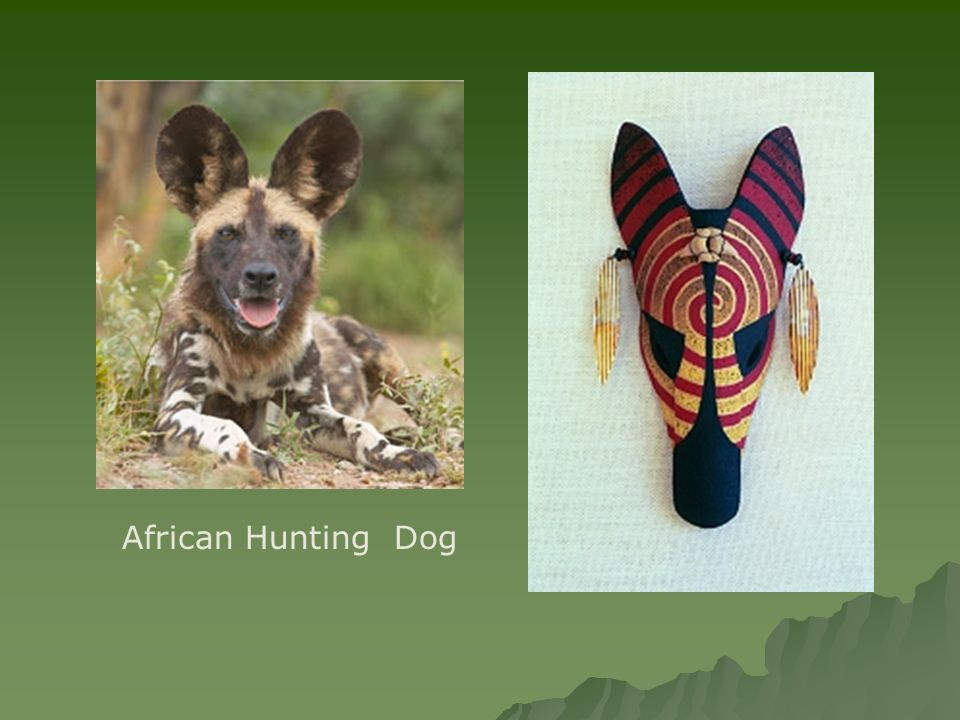 African Hunting Dog