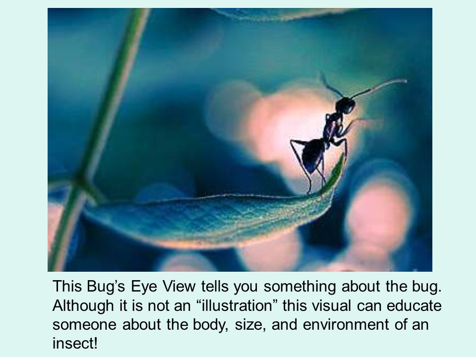 This Bugs Eye View tells you something about the bug.