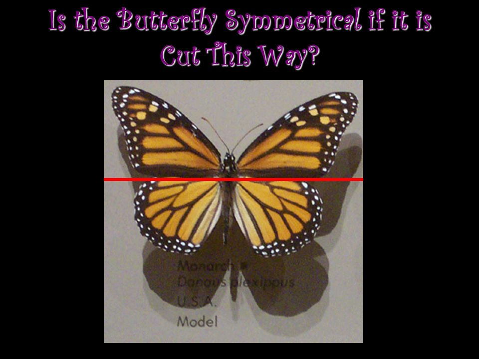 Is the Butterfly Symmetrical if it is Cut This Way
