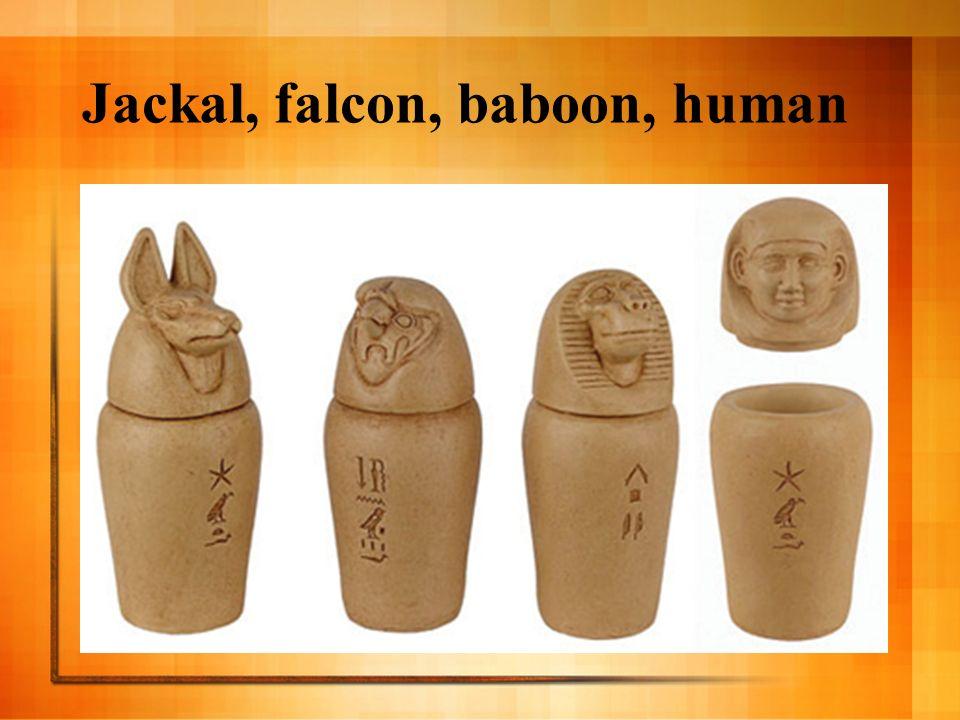 Jackal, falcon, baboon, human