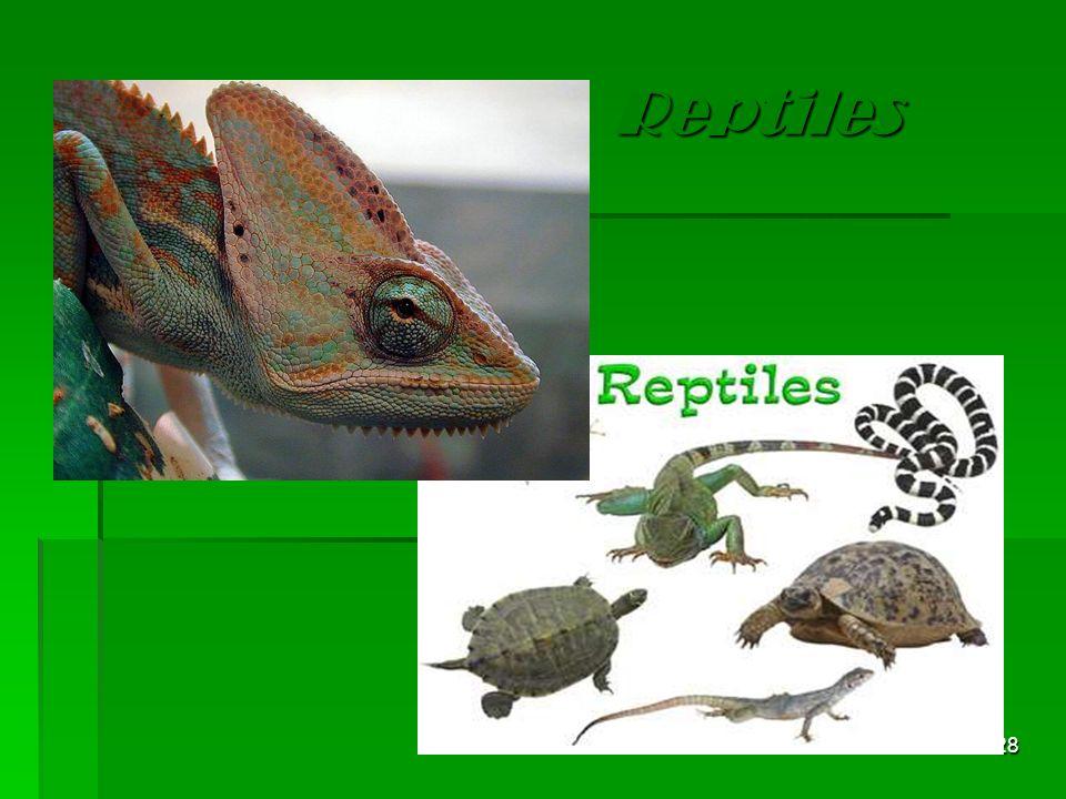 Reptiles 28