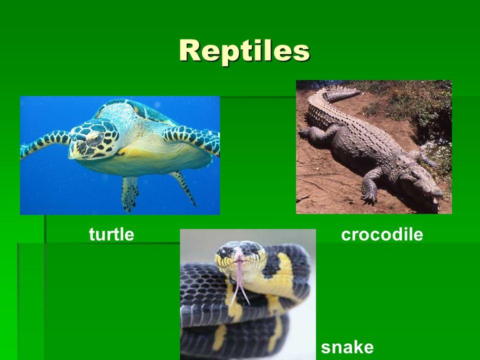 Reptiles turtle snake crocodile