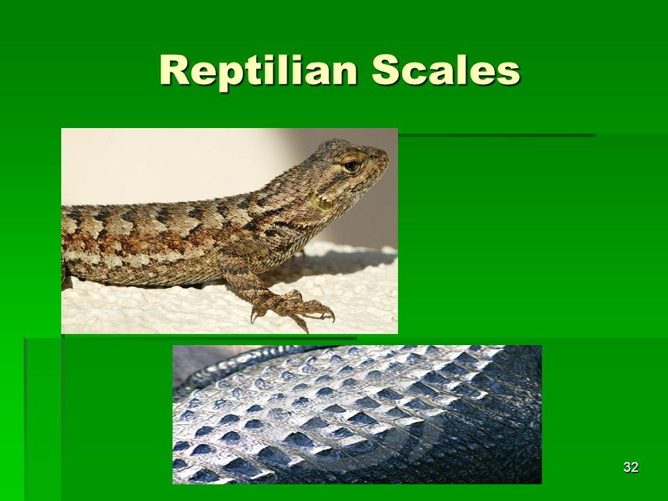 Reptilian Scales 32