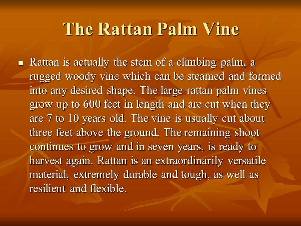 The Rattan Palm Vine Rattan is actually the stem of a climbing palm, a rugged woody vine which can be steamed and formed into any desired shape. The l