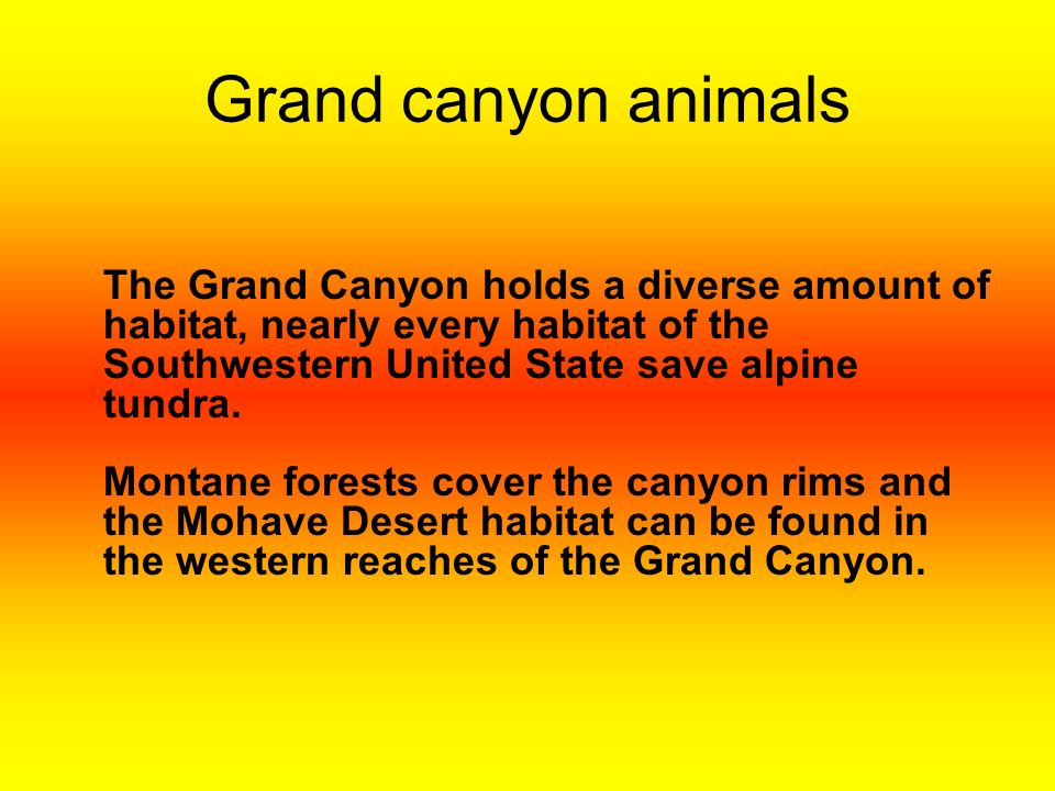 My opinion In my opinion the Grand Canyon is a real marvelous wonder of the world.