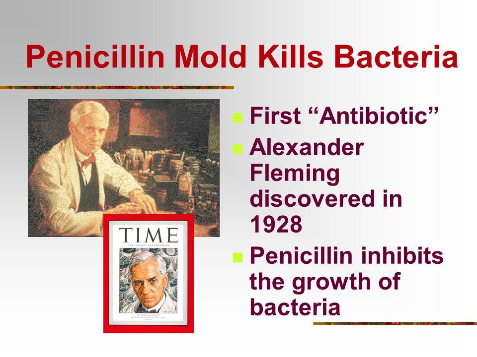 Penicillin Mold (Fungus)