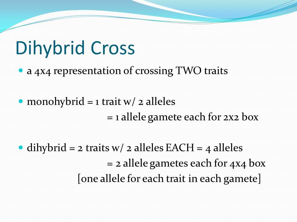 Dihybrid Cross a 4x4 representation of crossing TWO traits monohybrid = 1 trait w/ 2 alleles = 1 allele gamete each for 2x2 box dihybrid = 2 traits w/