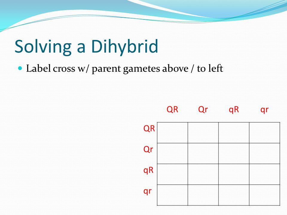 Solving a Dihybrid Label cross w/ parent gametes above / to left QRQrqRqr QR Qr qR qr