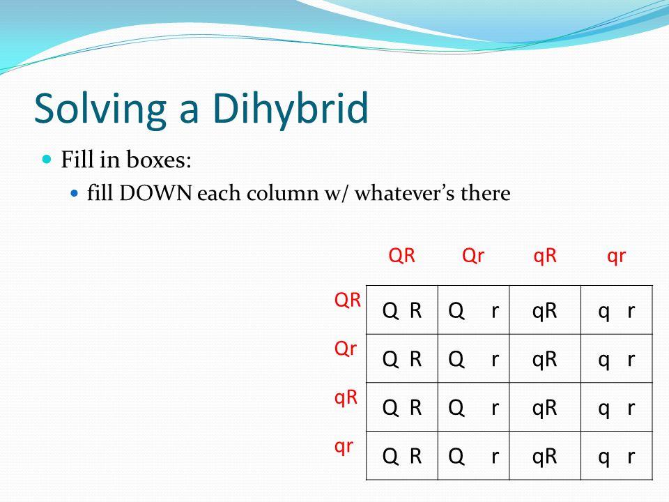 Solving a Dihybrid Fill in boxes: fill DOWN each column w/ whatevers there QRQrqRqr QR Q rqRq r Qr Q RQ rqRq r qR Q RQ rqRq r Q RQ rqRq r