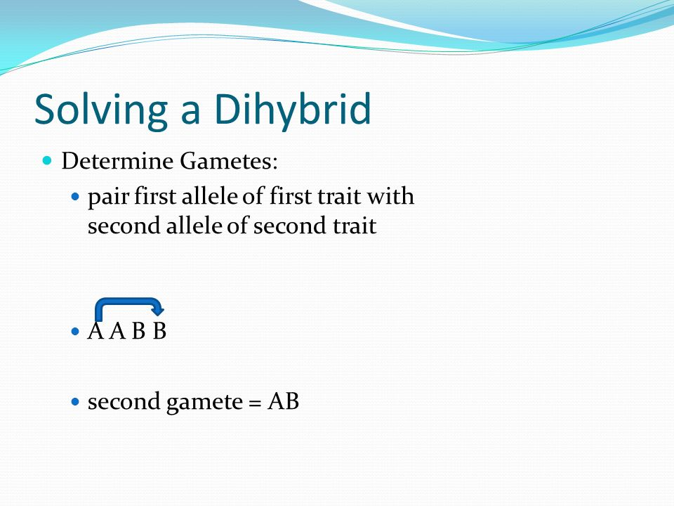 Solving a Dihybrid Determine Gametes: pair first allele of first trait with second allele of second trait A A B B second gamete = AB