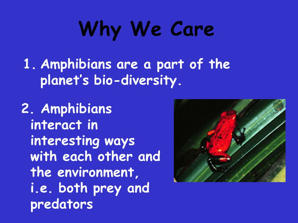 Amphibian Habitats rivers and streams lakes, ponds, marshes grasslands forests