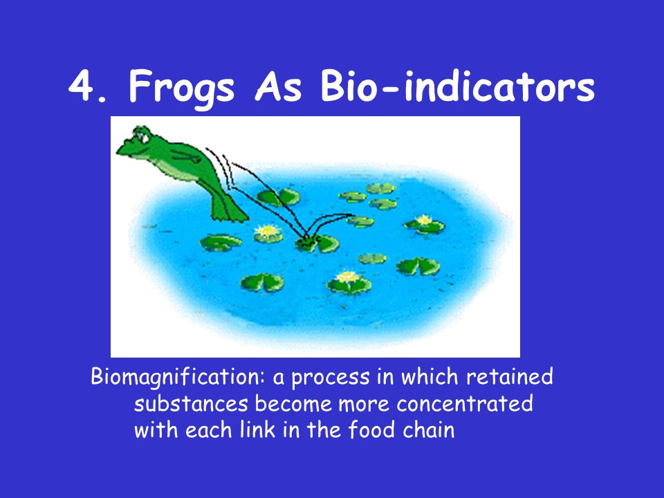 4. Frogs As Bio-indicators 1) double life--amphibious 2) permeable skin 3) absorb and concentrate toxins-- biomagnification