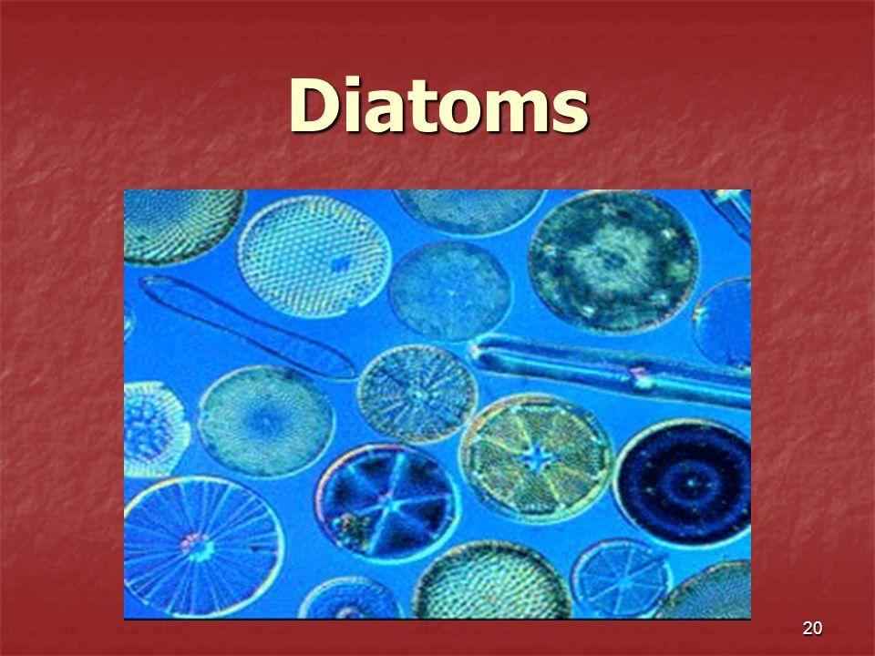 20 Diatoms