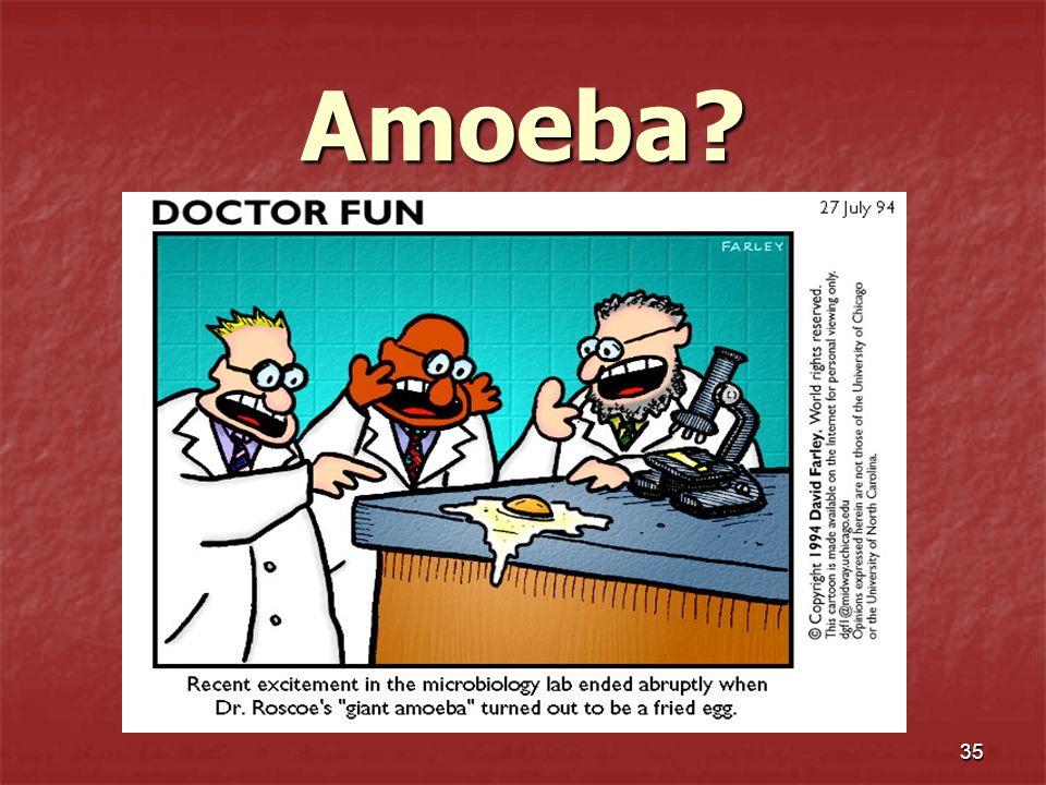 35 Amoeba?