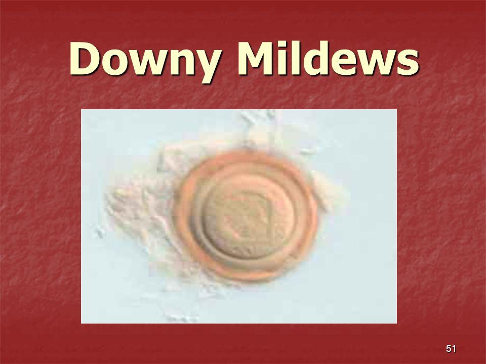 51 Downy Mildews