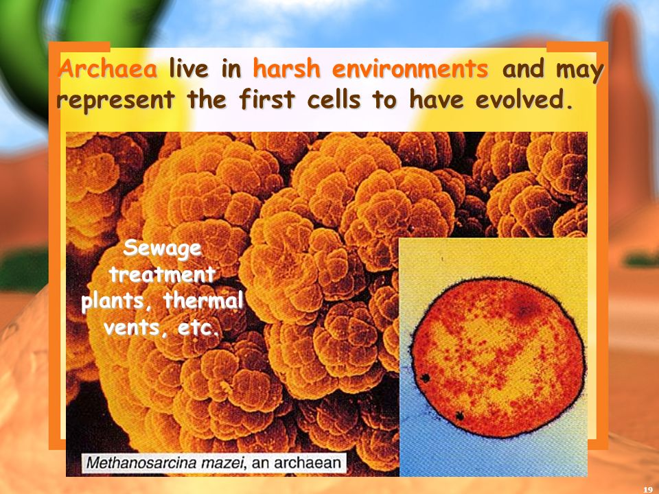 19 Archaea live in harsh environments and may represent the first cells to have evolved.