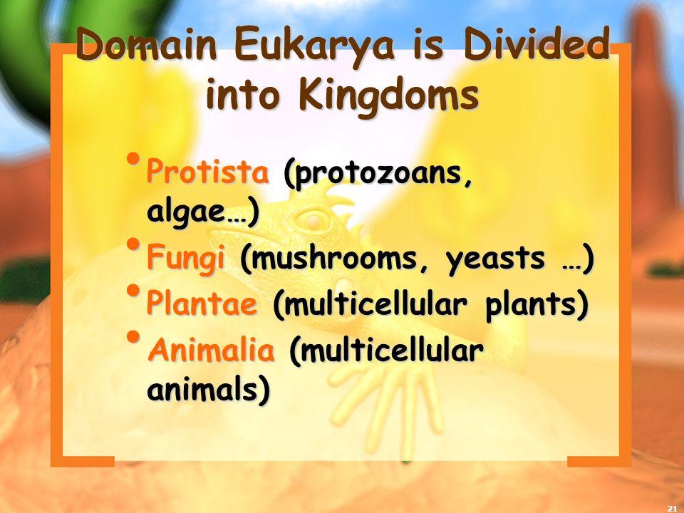 21 Domain Eukarya is Divided into Kingdoms Protista (protozoans, algae…) Protista (protozoans, algae…) Fungi (mushrooms, yeasts …) Fungi (mushrooms, y