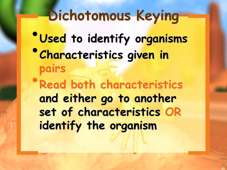 35 Dichotomous Keying Used to identify organisms Used to identify organisms Characteristics given in pairs Characteristics given in pairs Read both characteristics and either go to another set of characteristics OR identify the organism Read both characteristics and either go to another set of characteristics OR identify the organism