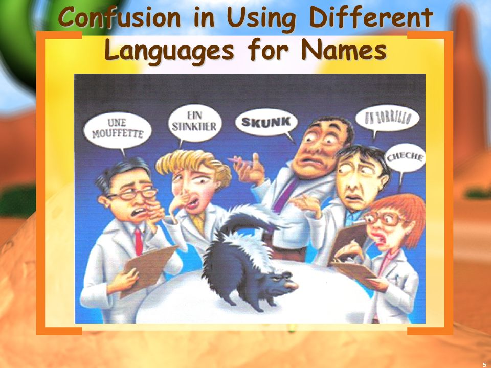 5 Confusion in Using Different Languages for Names