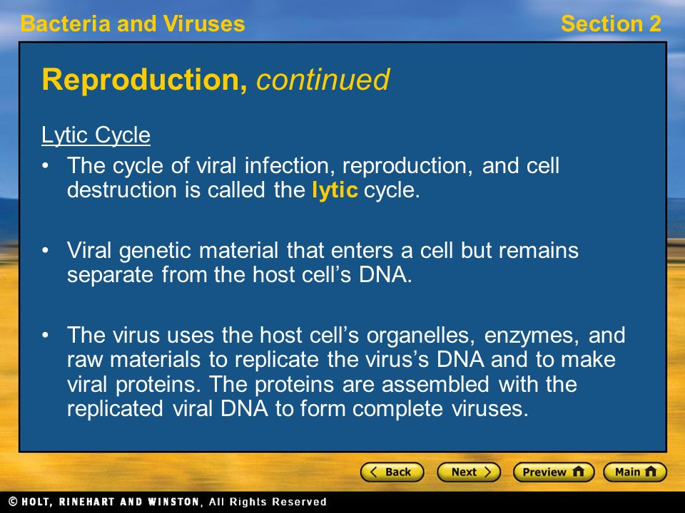Bacteria and VirusesSection 2 Reproduction, continued Lytic Cycle The cycle of viral infection, reproduction, and cell destruction is called the lytic