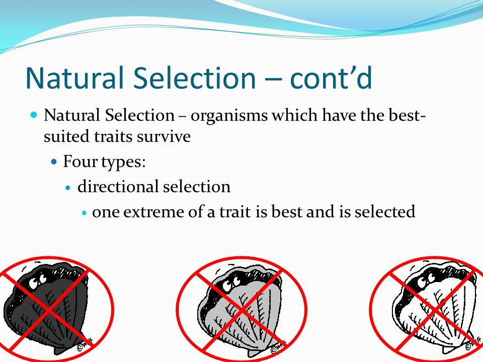 Natural Selection – contd Natural Selection – organisms which have the best- suited traits survive Four types: directional selection one extreme of a