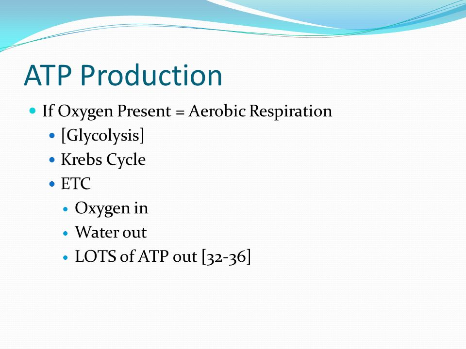 ATP Production If Oxygen Present = Aerobic Respiration [Glycolysis] Krebs Cycle ETC Oxygen in Water out LOTS of ATP out [32-36]