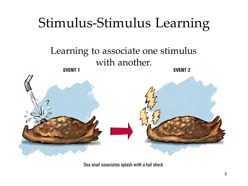 8 Stimulus-Stimulus Learning Learning to associate one stimulus with another.