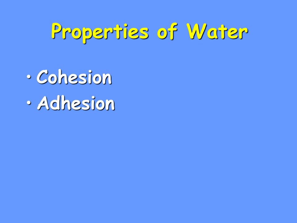Properties of Water CohesionCohesion AdhesionAdhesion High Specific HeatHigh Specific Heat
