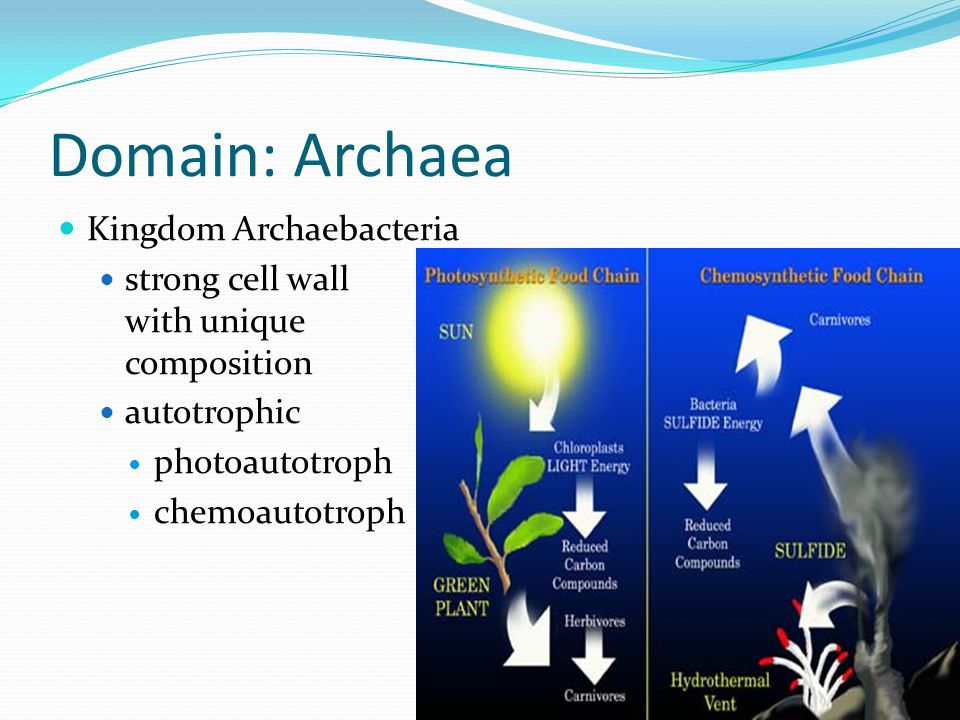 Domain: Archaea Kingdom Archaebacteria strong cell wall with unique composition autotrophic photoautotroph chemoautotroph