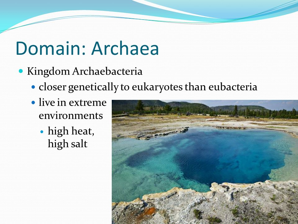 Domain: Archaea Kingdom Archaebacteria closer genetically to eukaryotes than eubacteria live in extreme environments high heat, high salt