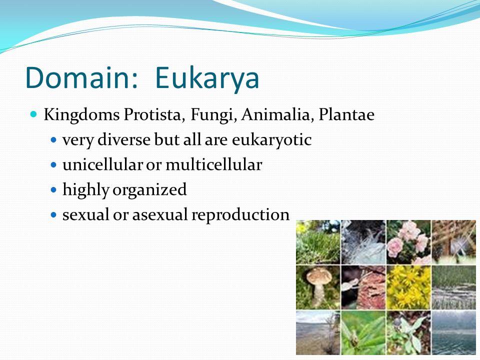 Domain: Eukarya Kingdoms Protista, Fungi, Animalia, Plantae very diverse but all are eukaryotic unicellular or multicellular highly organized sexual o