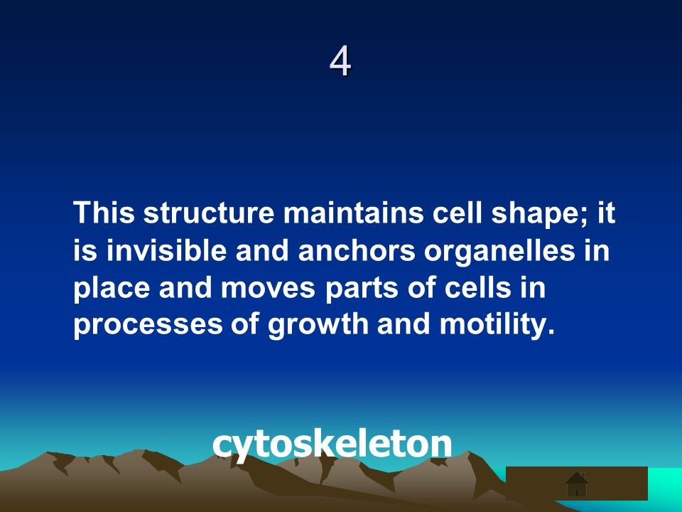 4 This structure maintains cell shape; it is invisible and anchors organelles in place and moves parts of cells in processes of growth and motility. c