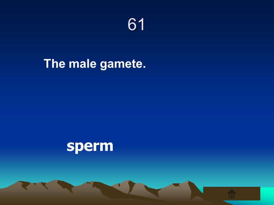 61 The male gamete. sperm